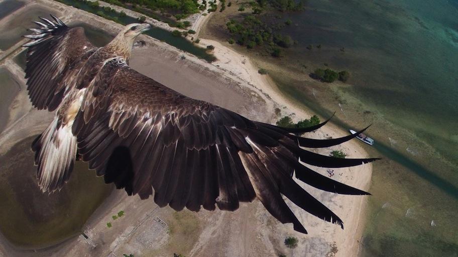 aguila-indonesia-foto-drone